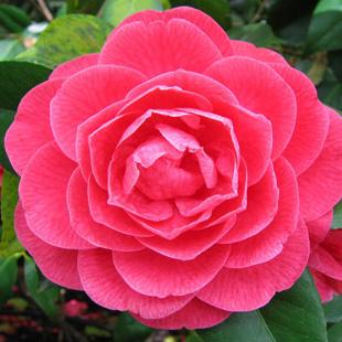 Etimologia delle piante e fiori ( parte prima ).  fiorfiorediMonza
